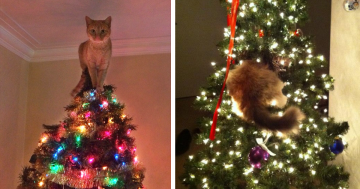 decorating-cats-destroying-trees-christmas-fb