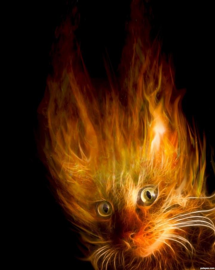 fire-cat