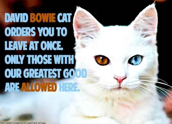 Bowie-cat