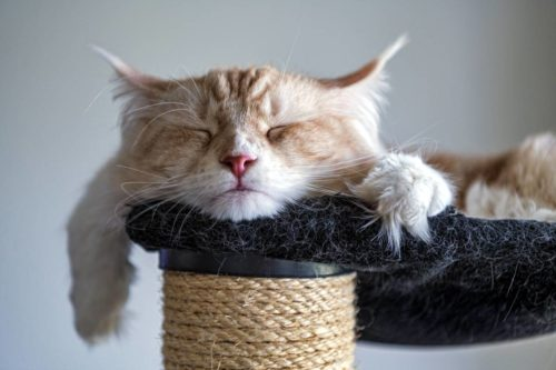 cat-sleeping-cat-tree