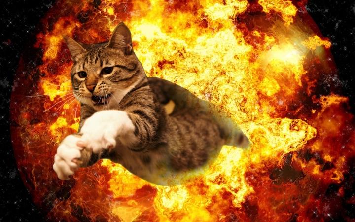 catexplosion
