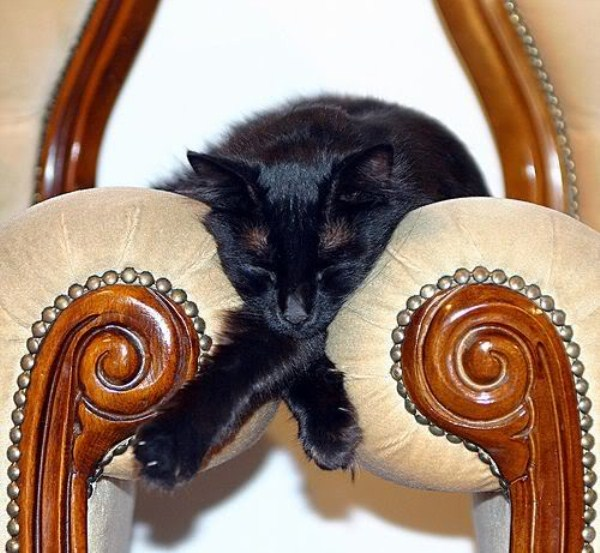 Crazy-Cat-Sleeping-Positions-55
