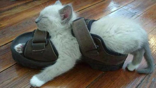 Crazy-Cat-Sleeping-Positions-6