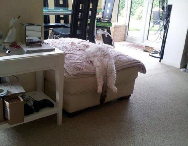 Crazy-Cat-Sleeping-Positions-7